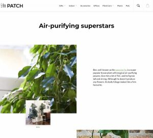 An Example for Landing Pages of the Air Purifying House Plants Google Ad